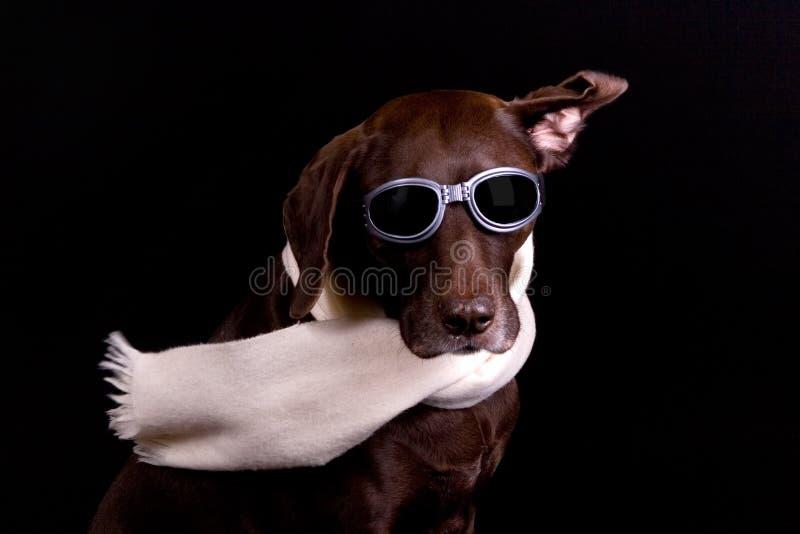 Download 狗晚上飞行员 库存图片. 图片 包括有 德语, 驯化, 可笑, 有风, 逗人喜爱, 宠物, 敌意, browne - 3666777