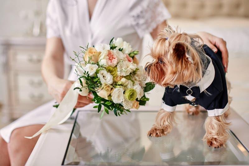 狗服装新郎嗅到的花束在新娘的手上 免版税图库摄影