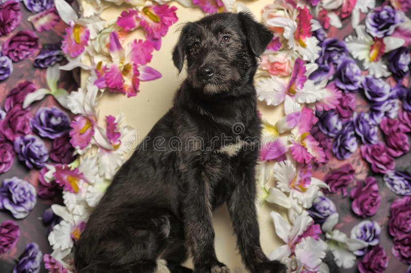 黑狗杂种 库存图片