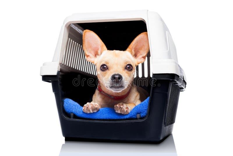 狗条板箱箱子 免版税库存照片