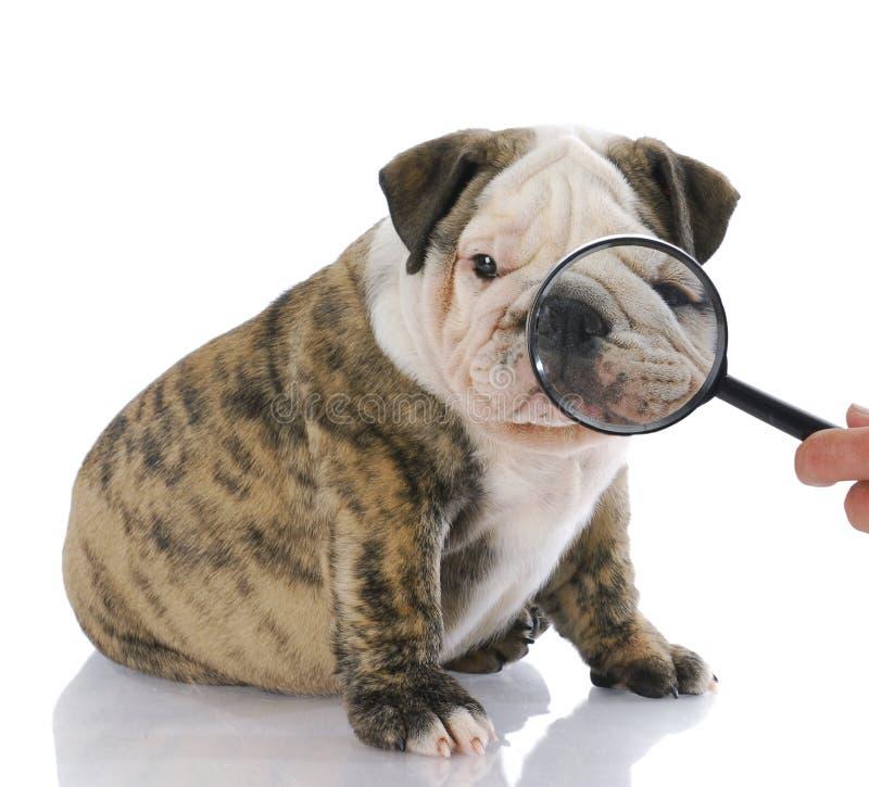 狗检查的表面 库存照片