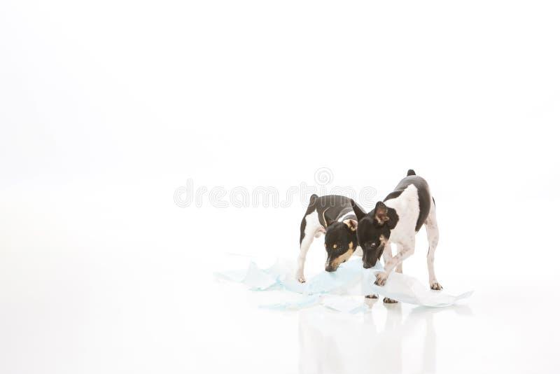 狗毁坏傻的垫 免版税库存照片