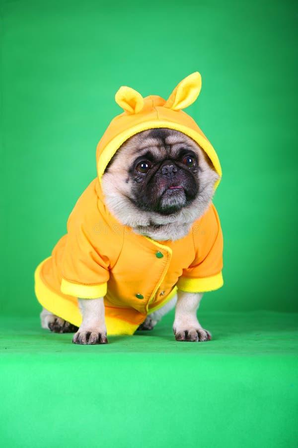 狗滑稽的宠物 库存图片
