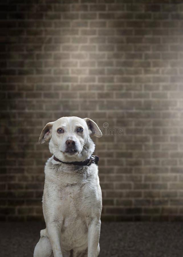 狗演播室摄影 库存照片