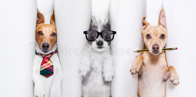 狗烧坏夫妇  免版税库存图片