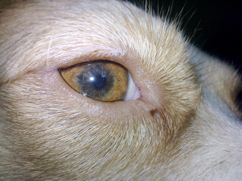 狗照片 免版税库存图片