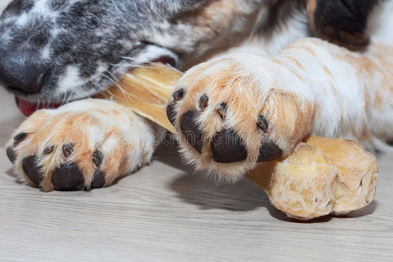 狗爪子和骨头接近  免版税库存图片