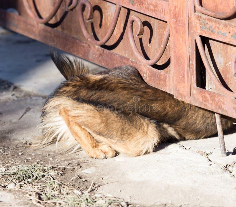 狗爬行在篱芭下 免版税库存照片