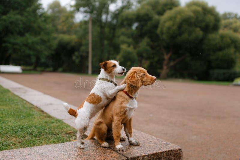 狗爱和拥抱 免版税库存图片