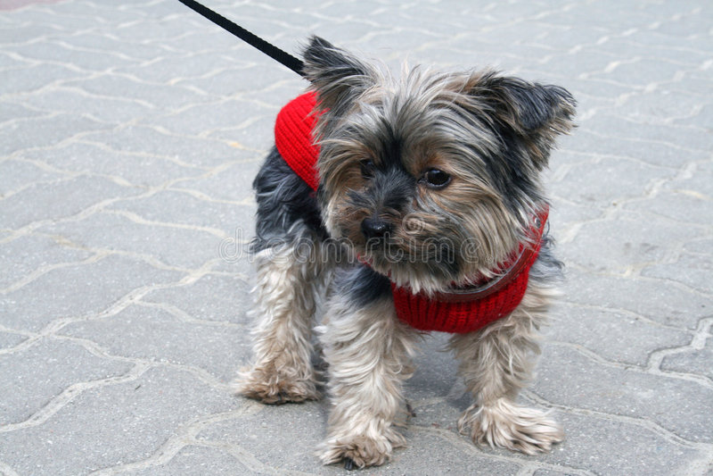 狗狗 免版税图库摄影