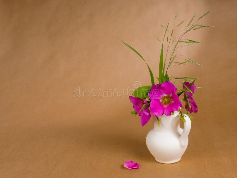 狗玫瑰和一些草地早熟禾花和叶子在一点白色陶瓷水罐和孤立共和国总督玫瑰花瓣在背景  库存图片