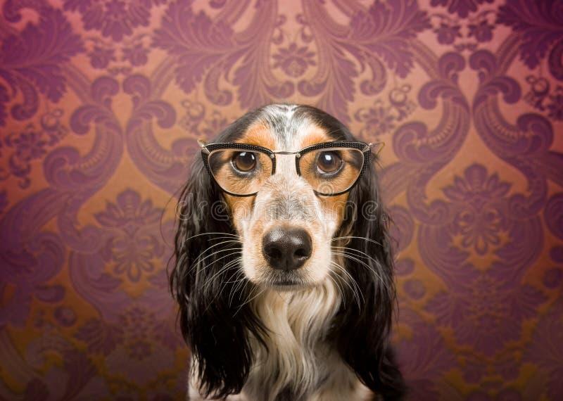 狗玻璃纵向 库存照片