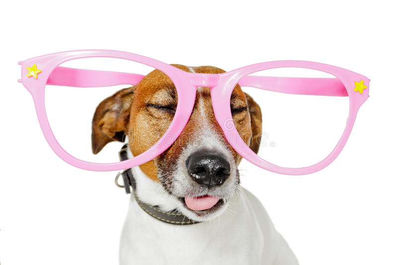 狗玻璃 库存照片