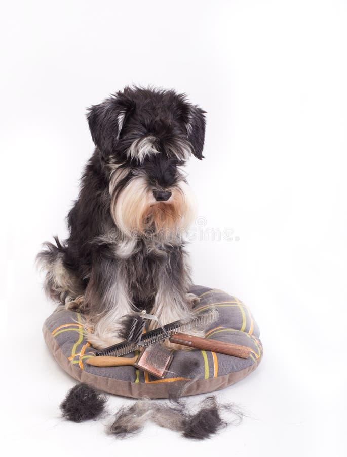 狗用修饰设备 免版税库存照片