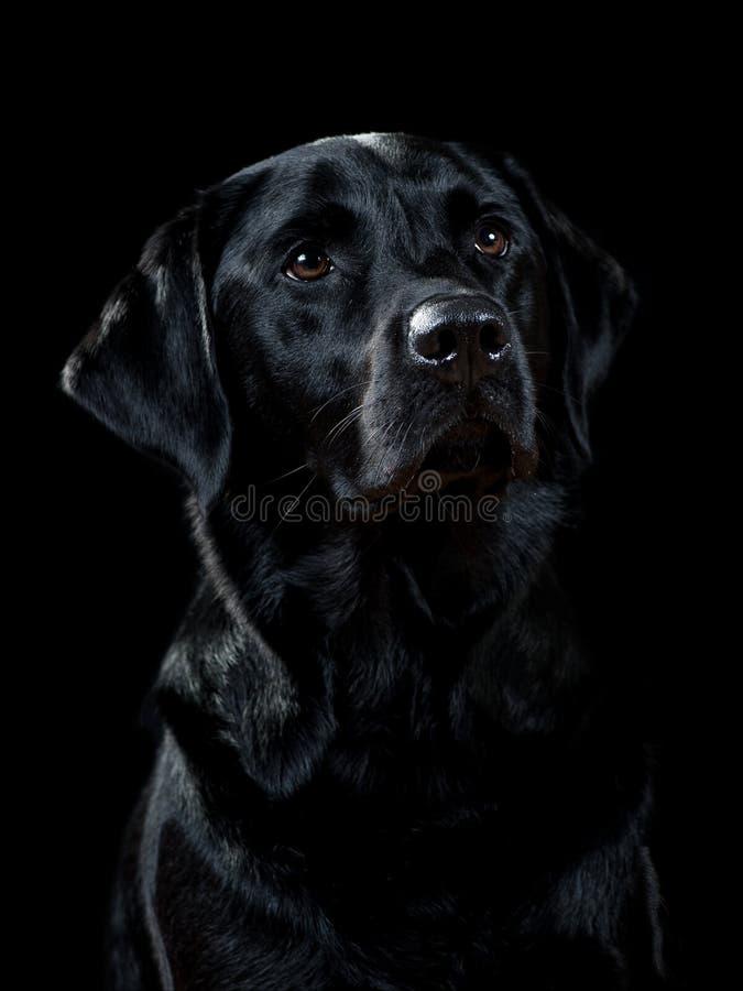 狗画象 库存照片