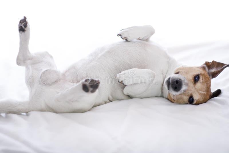狗病残,不适或睡觉 免版税库存图片