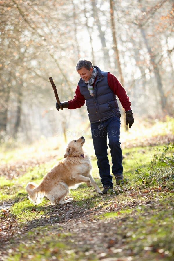 狗的人投掷棍棒在步行 库存图片
