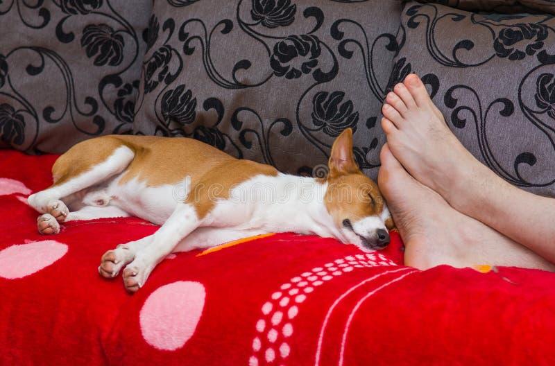 狗的平静的生活 免版税库存图片