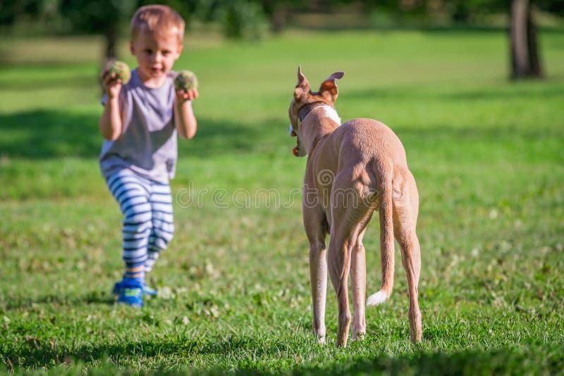 狗的男孩投掷的球 免版税库存图片