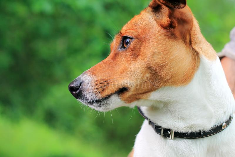 动物士狗交配_图片 包括有 空白, 房子, 纵向, 哺乳动物, 小狗, 交配动物者
