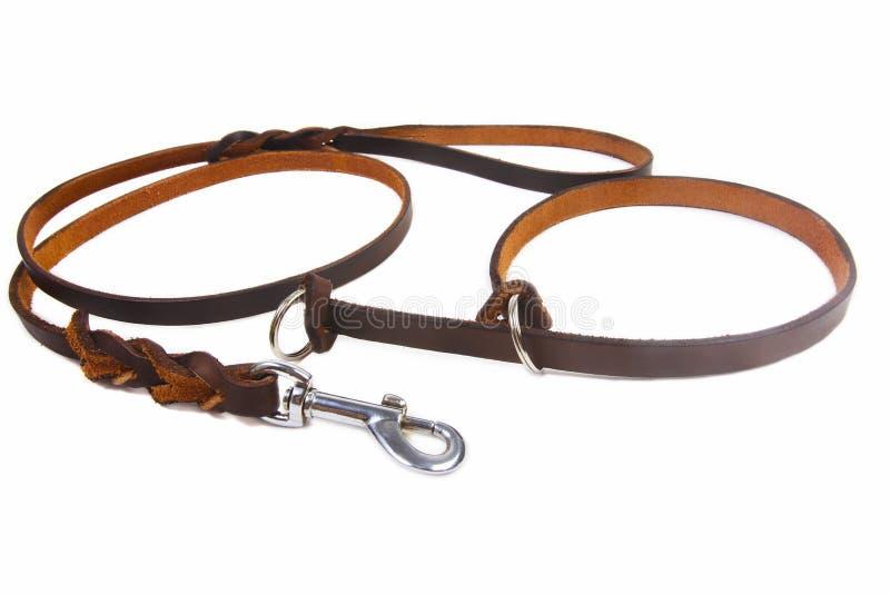 狗皮革皮带和衣领 免版税库存图片