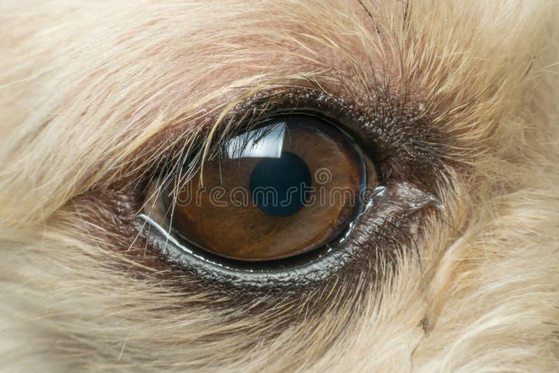 狗眼睛宏指令  免版税库存照片