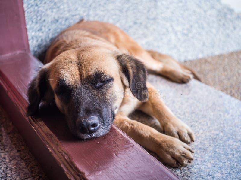 狗睡眠 免版税库存照片
