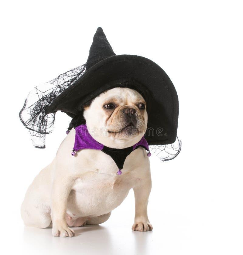 狗穿戴象巫婆 免版税库存照片