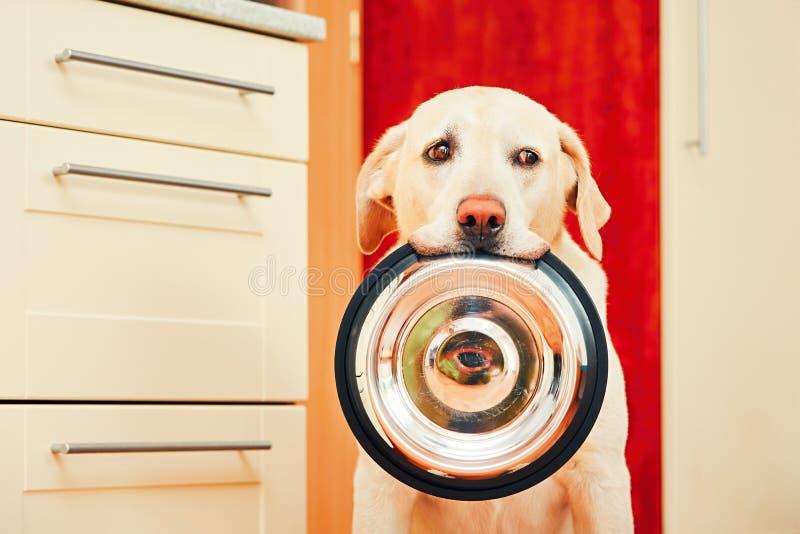 Download 狗等待哺养 库存图片. 图片 包括有 设备, 表达式, 期望, 健康, 热衷, 户内, 滑稽, 饥饿, 患者 - 72357251