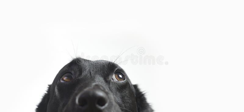 狗纵向s 免版税图库摄影