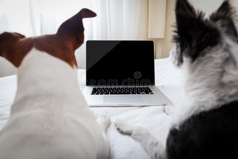 狗膝上型计算机 库存图片
