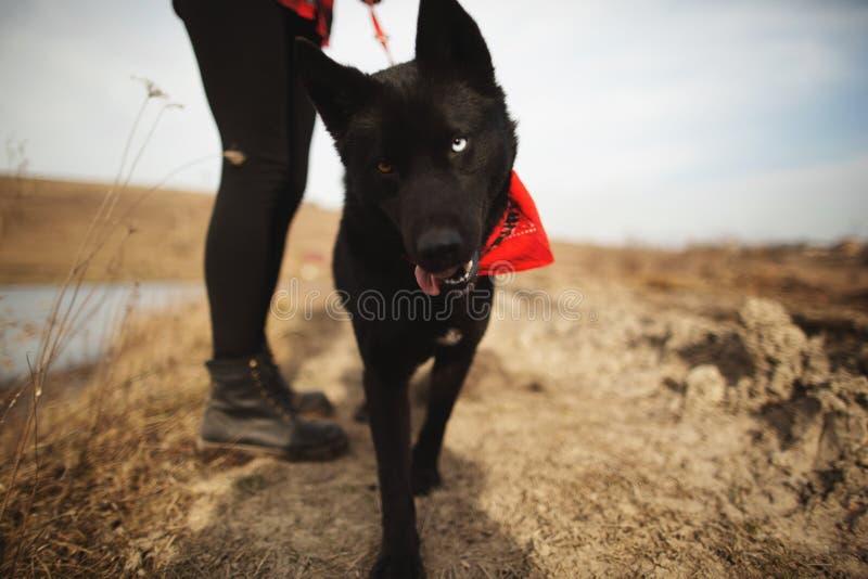 狗获得与她的所有者的乐趣在秋天领域 库存照片