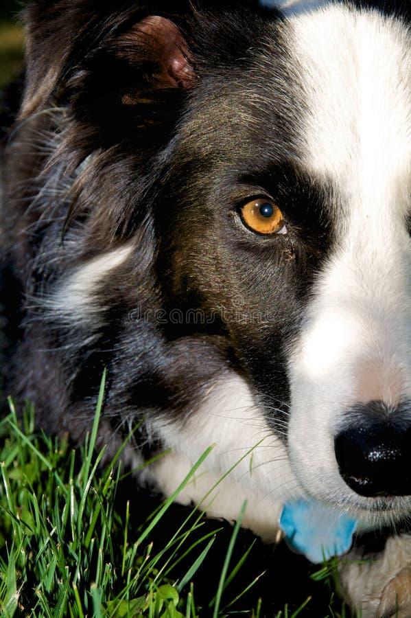 狗表面 免版税图库摄影