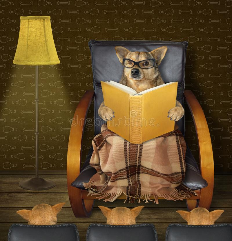 狗读一本书对小狗 库存图片