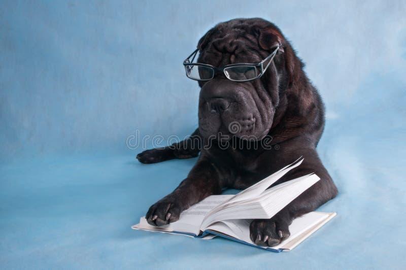 狗读取 库存图片