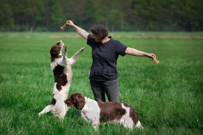 狗跳捉住从所有者的嚼骨头 库存图片