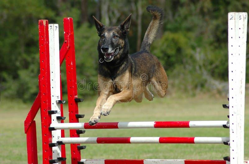 狗跳 免版税图库摄影