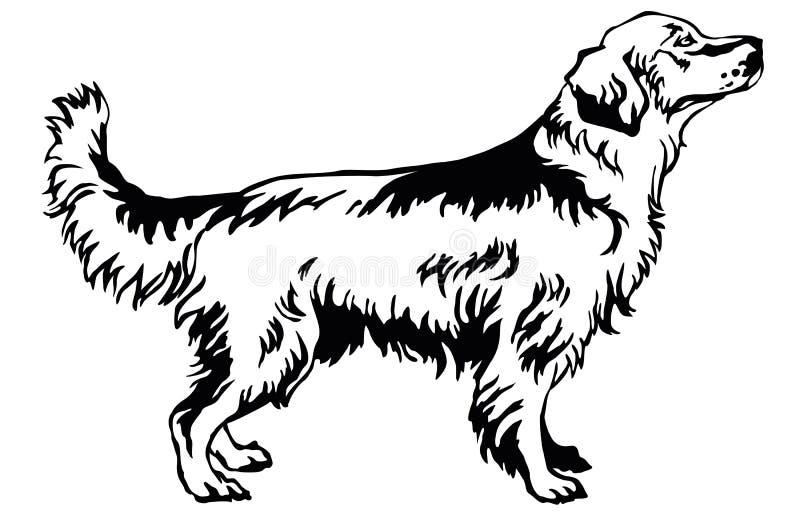 狗金毛猎犬装饰常设画象,导航不适 库存例证