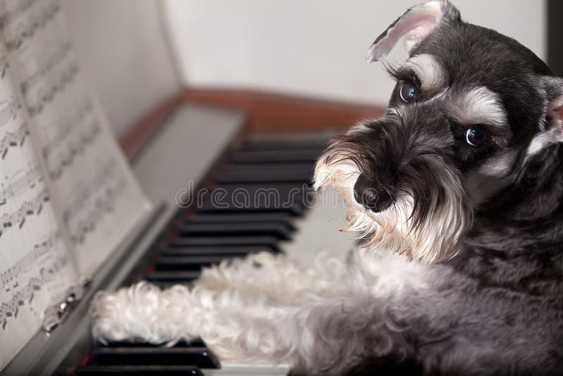 狗钢琴作用 免版税库存图片