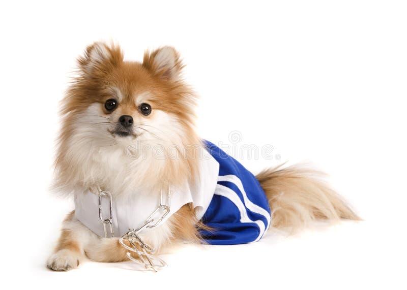 狗锻炼 免版税库存照片
