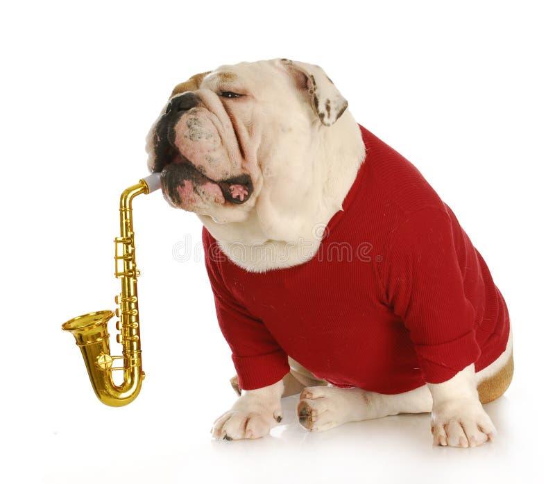 狗音乐会 免版税图库摄影