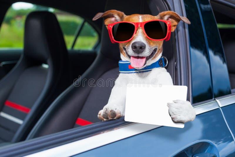 狗驾驶执照 免版税库存照片