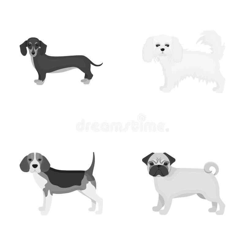 狗,动物,国内和在单色样式的其他网象 达克斯猎犬,马尔他,在集合汇集的牛头犬象 皇族释放例证