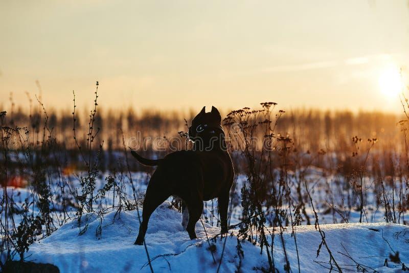 狗,晚上,黎明,树,剪影,河,夜,光,黄昏 免版税库存图片