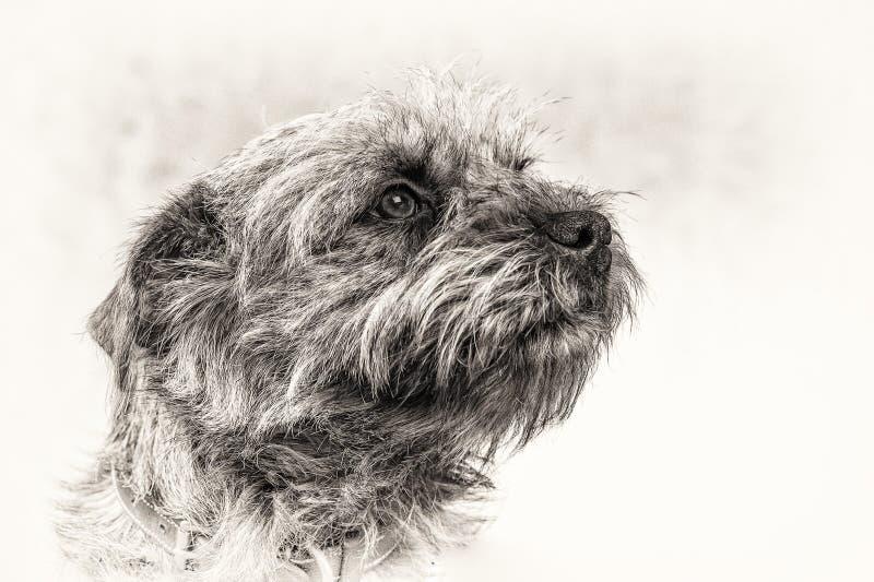 狗,狗,头,守纪,忠诚,信任,黑色,白色, sta 免版税库存图片