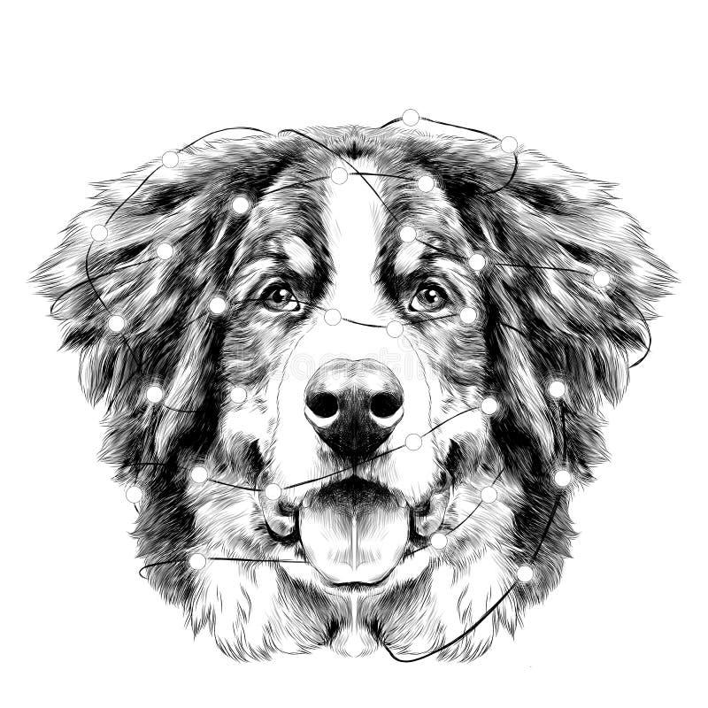 狗头伯尔尼的山狗剪影传染媒介 库存例证