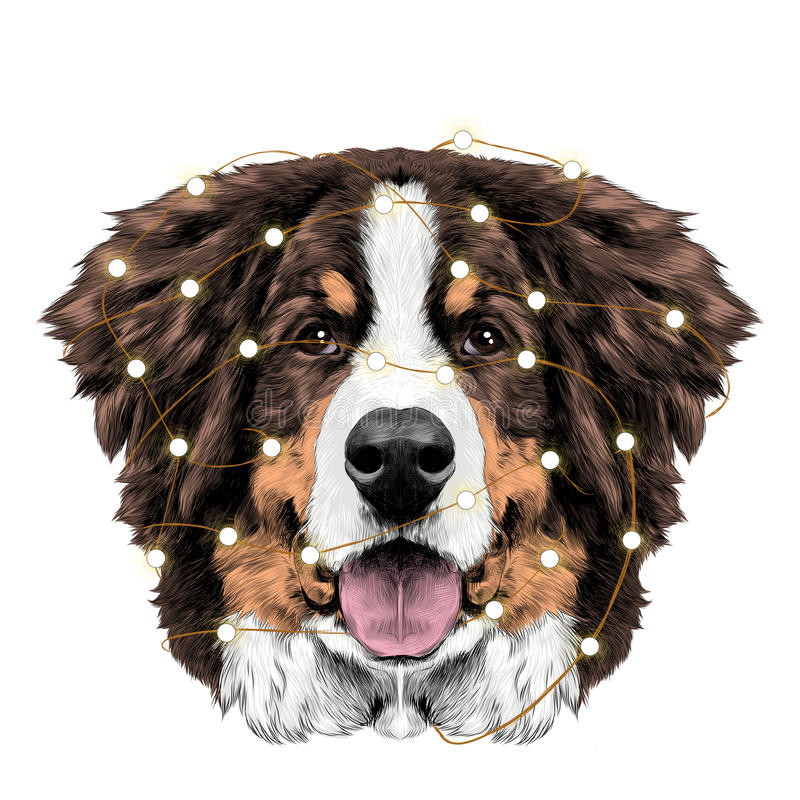 狗头伯尔尼的山狗剪影传染媒介 皇族释放例证