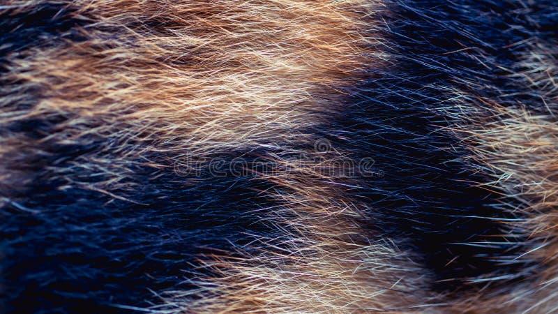 狗/猫白棉布毛皮特写镜头  自然抽象的背景 免版税库存图片