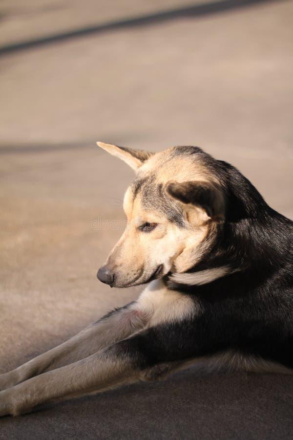 狗 图库摄影