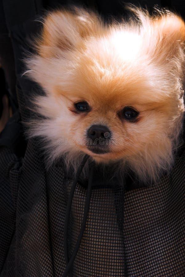 狗 库存照片
